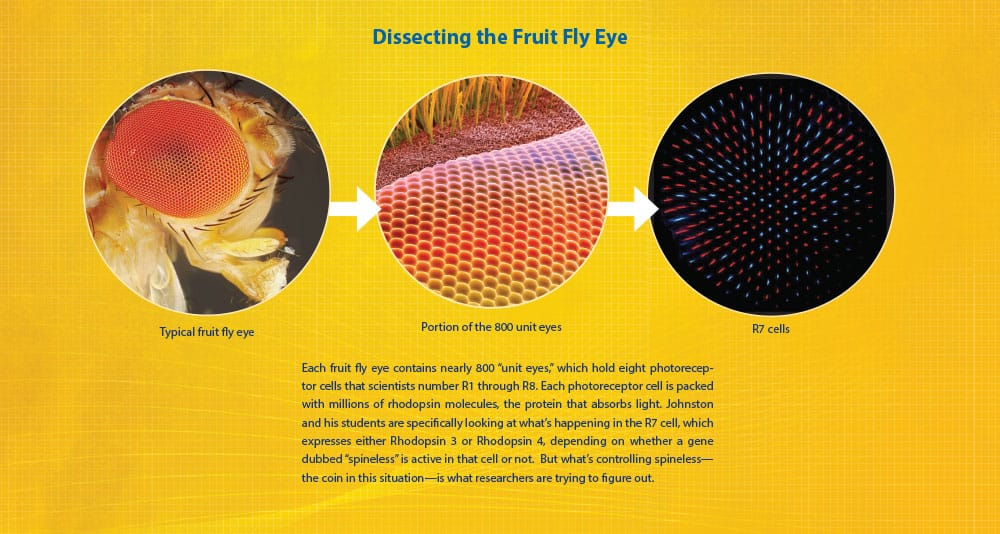 fly eye graphic