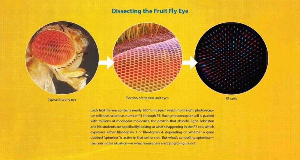 fly eye graphic