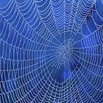 Amazing Spider Silk: Super-Elastic Proteins Key to Spider Web's Stretchiness