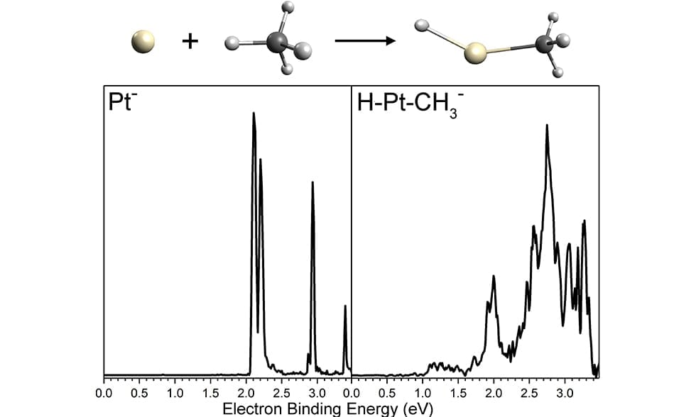 The Bowen group realized highly selective C-H bond activation in methane by single platinum atomic anions.