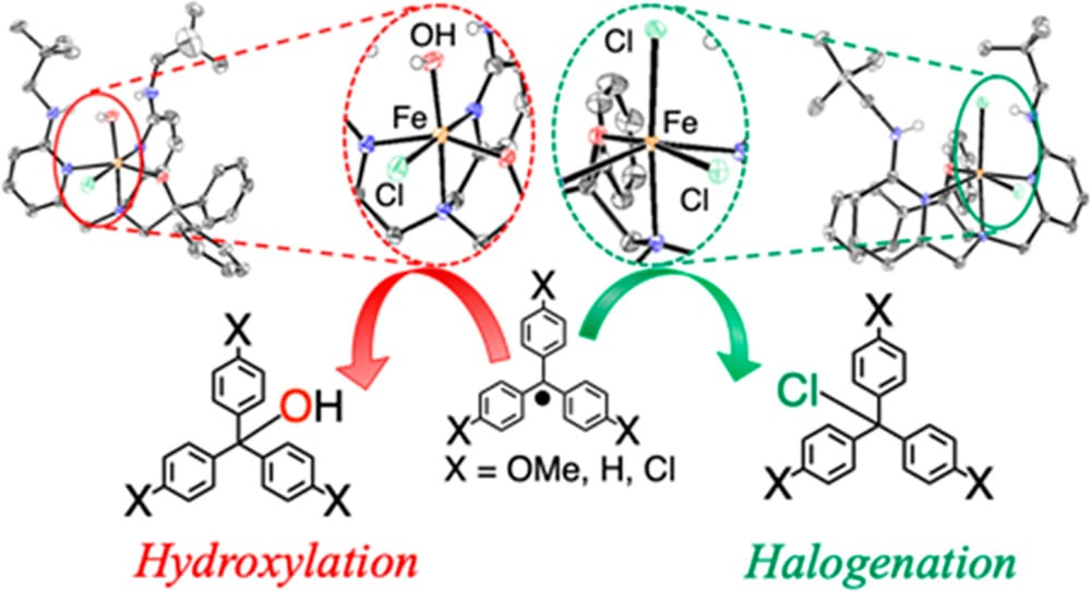 processes of hydroxylation and halogenation
