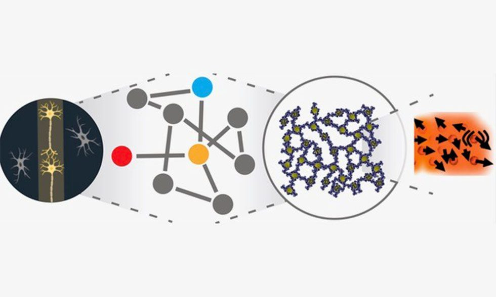 The neuronal network of a mouse brain next to and a representative network, next to a polymer-networked array of engineered nanoparticles that would be capable to macroscopic readouts as suggested by emergent arrayed of dipoles