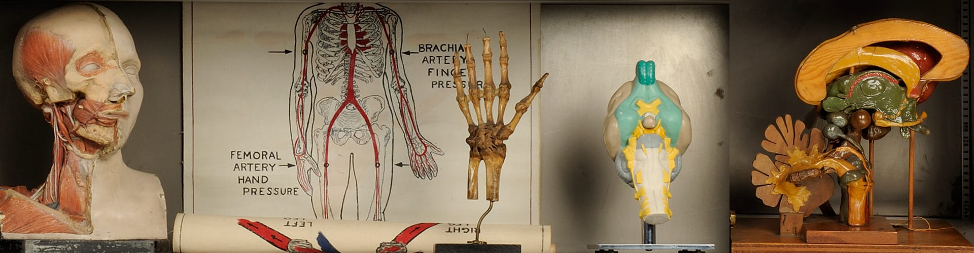 Cabinet with medical objects like hands and body diagrams
