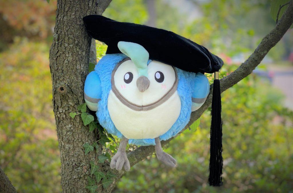 Graduating Bluejay