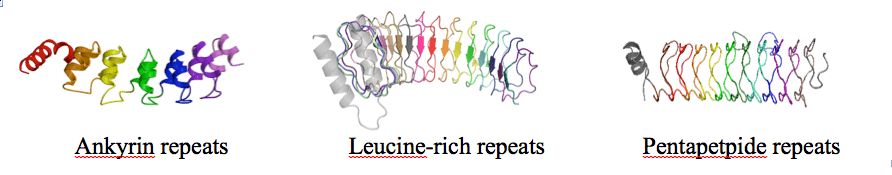 translationally symmetric proteins that can be fragmented and extended