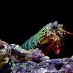 colorful underwater sea life