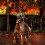 collage photo of two kangaroos embracing with fire in background